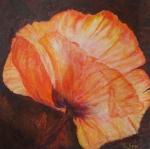 Blomma av IL Soge