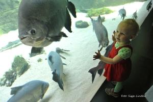Titta fisken!