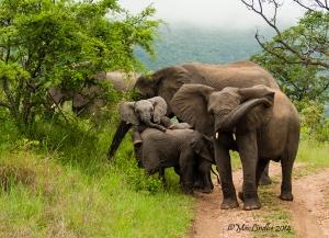 Elefantröra