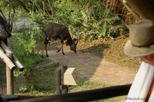 Utsikt från verandan.
