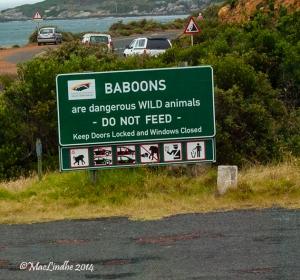 Varning för babianer!