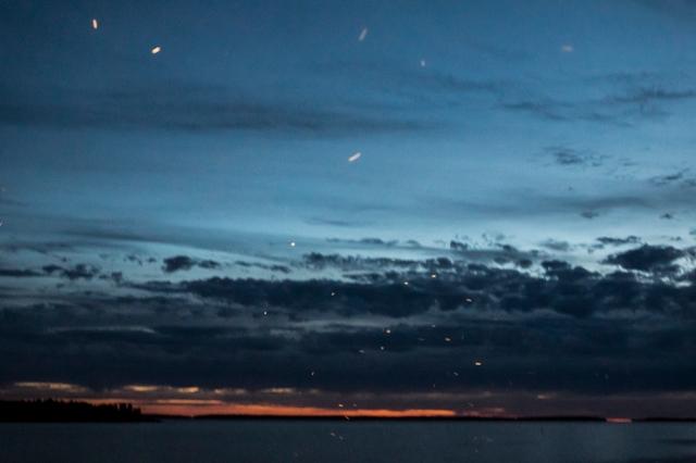 nattflygare