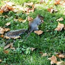 Djurliv i Hyde Park